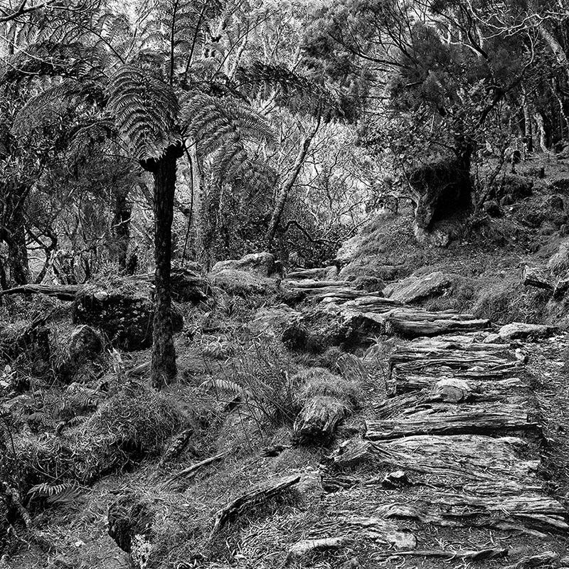 Fougère et chemin de rondins