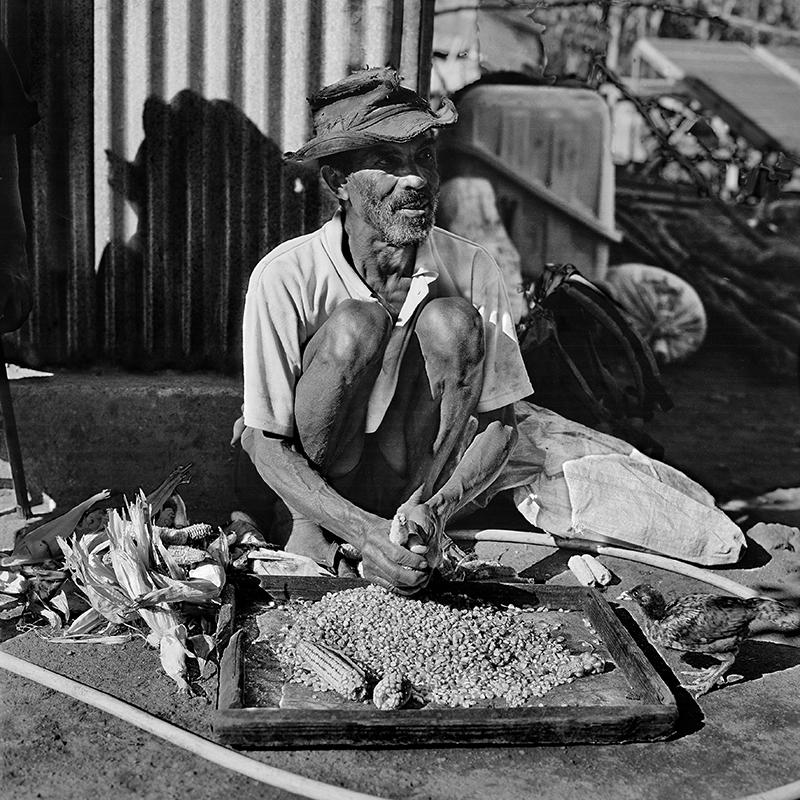 L'égrenage des épis de maïs – Les Lataniers
