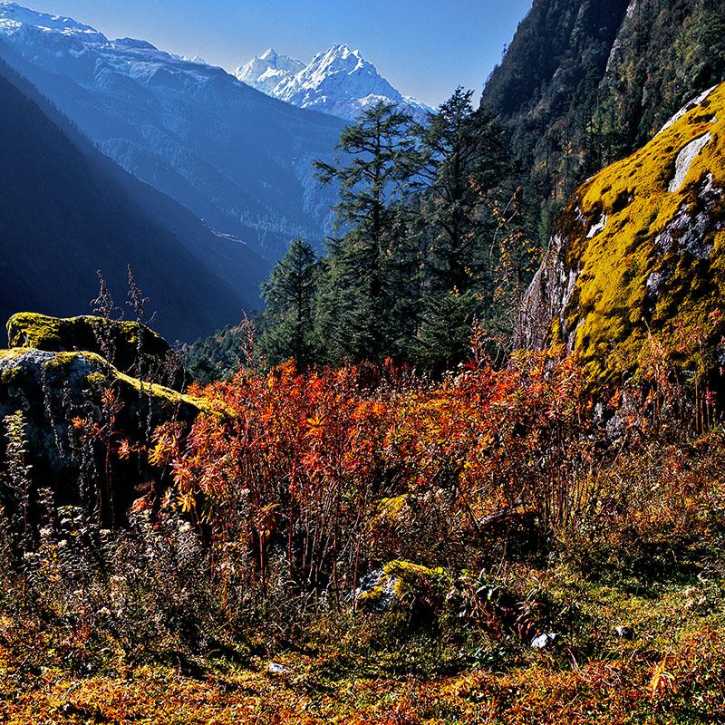 Lumières d'automne sur la Yumtang Valley - Sikkim (Inde)