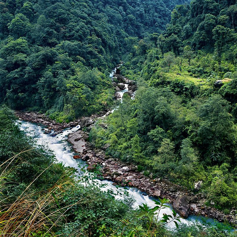 Rivière et végétation verdoyante en moyenne altitude - Sikkim (Inde)