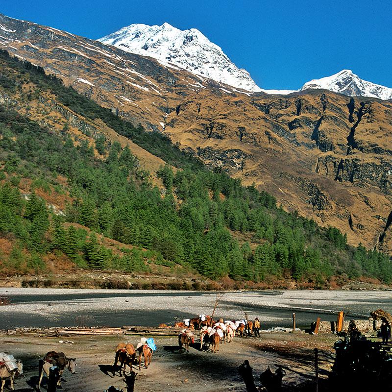 Caravane de mules dans la vallée de la Kali Gandaki - Népal
