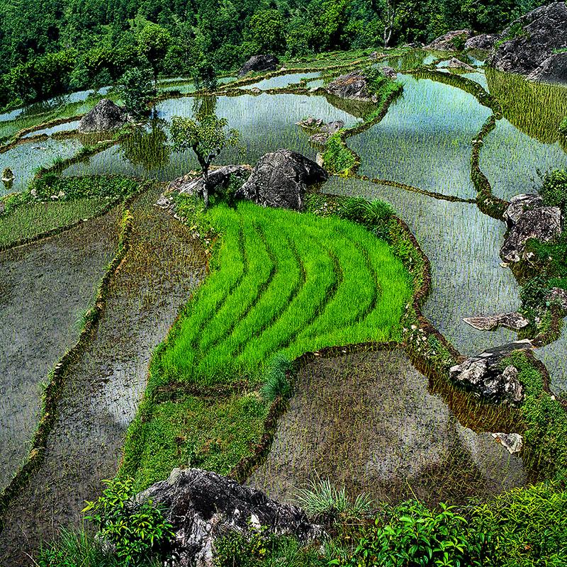 L'influence du relief dans la géométrie des rizières - Népal