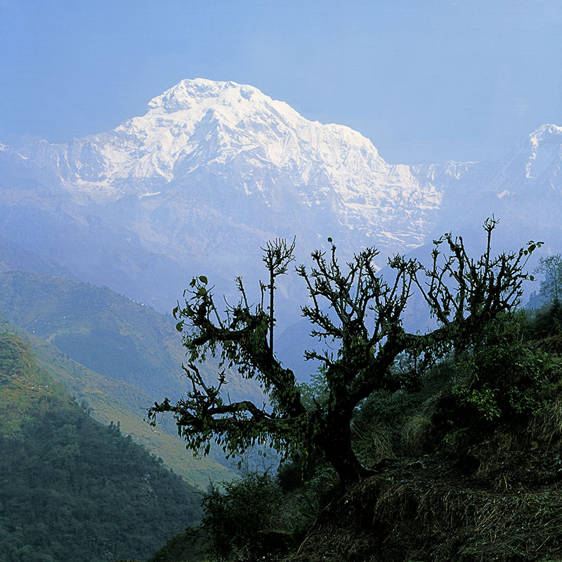 Massif des Annapurna - Népal