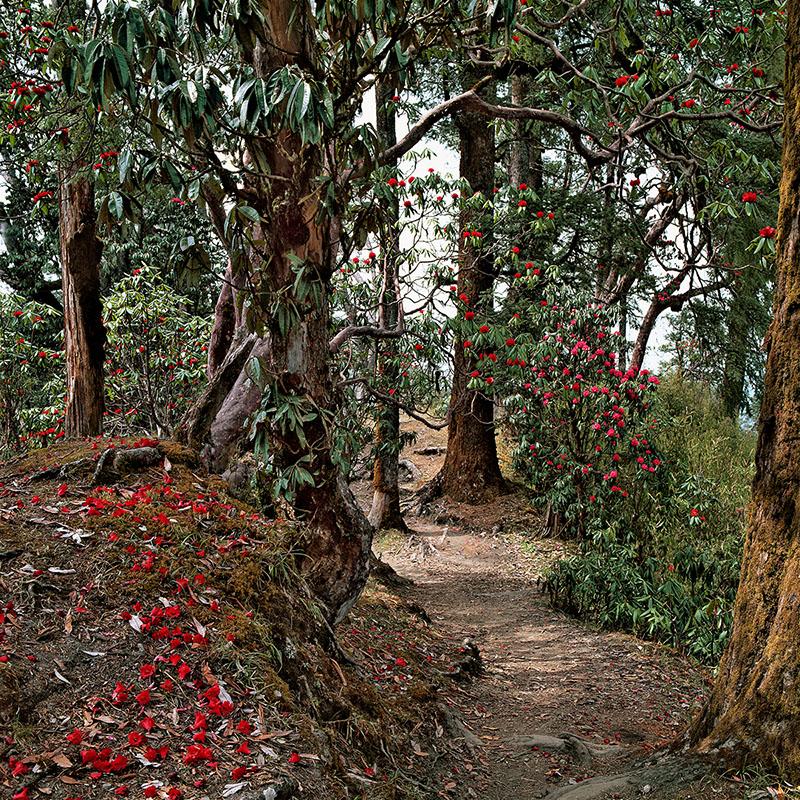 Sur le sentier de Ghorepani - Népal