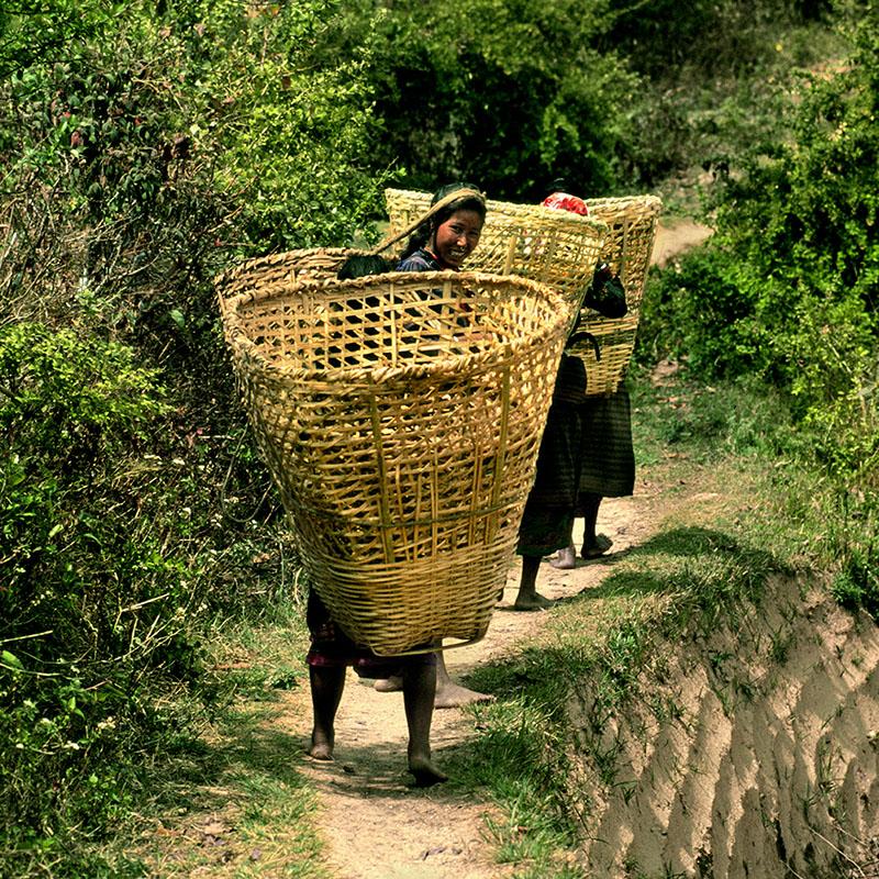 Retour à vide moins fatiguant - Hélambu, Népal
