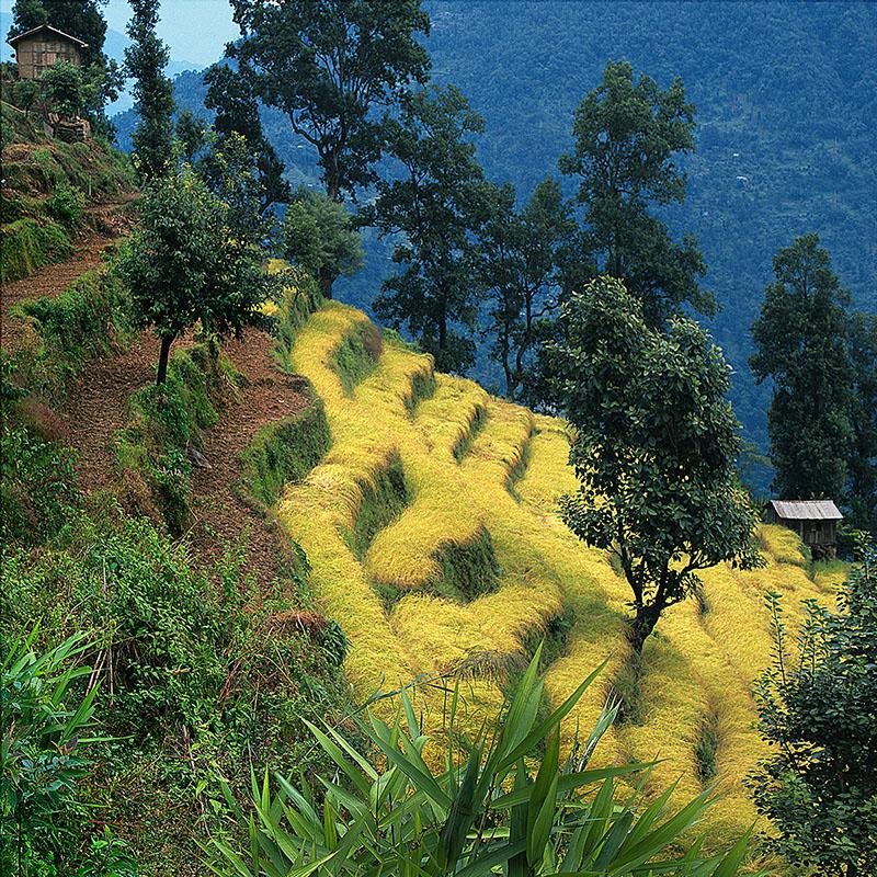Route de Pemayangtsé - Sikkim (Inde)