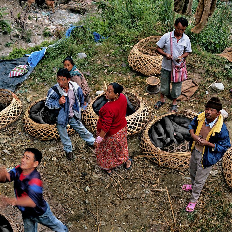 Marché aux cochons - Route de Thanggu, Sikkim (Inde)