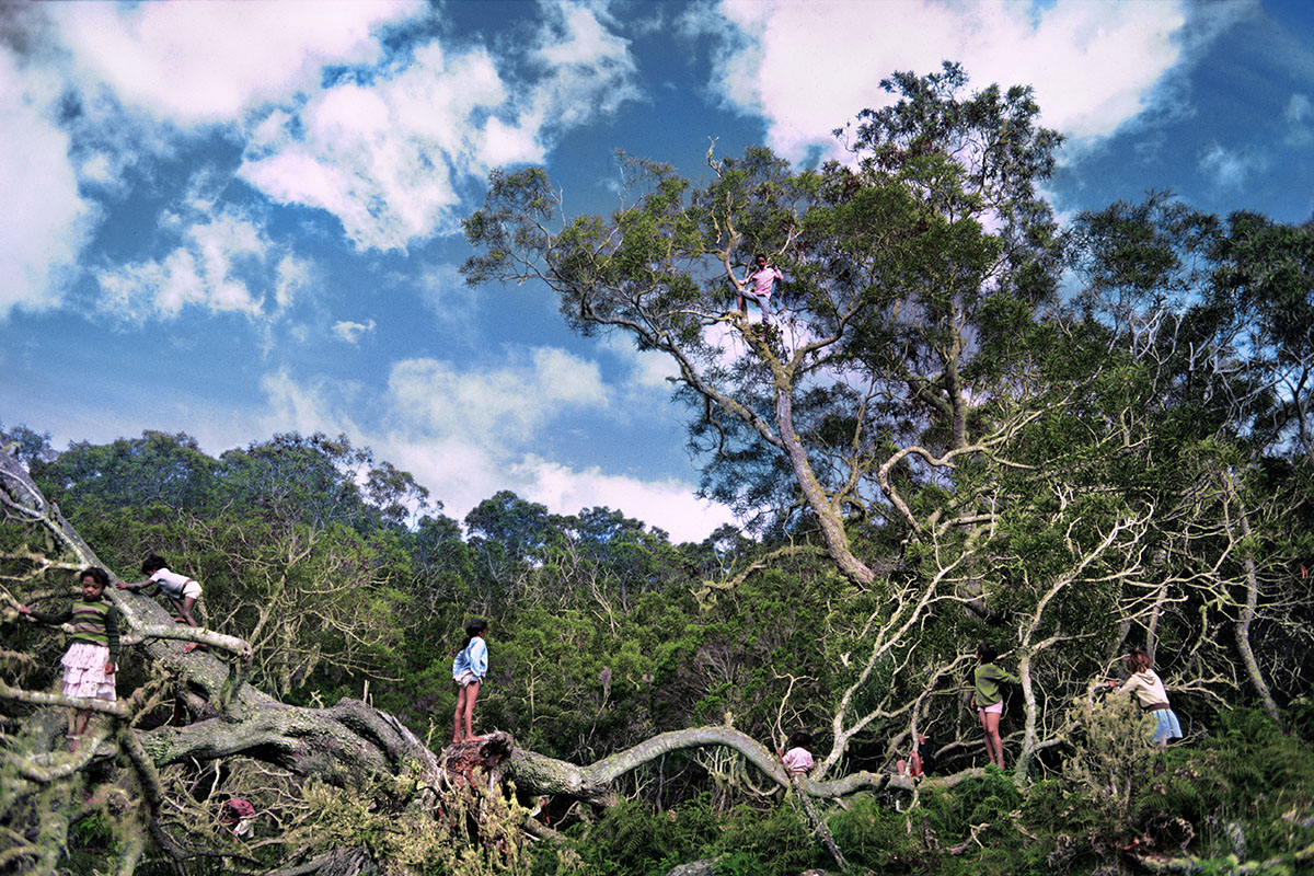 Gamins dans les tamarins (1) – Plaine des Tamarins