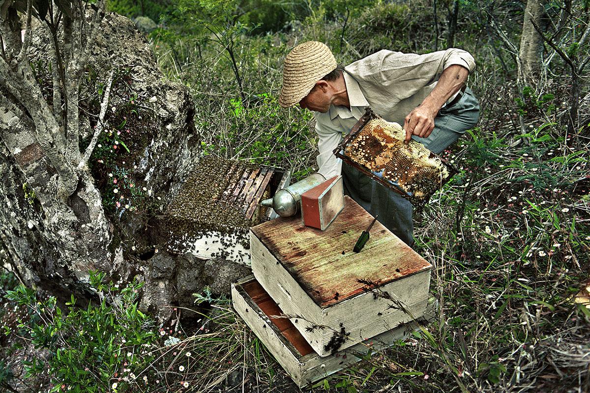 José s'est constitué un rucher d'une vingtaine de ruches - Marla