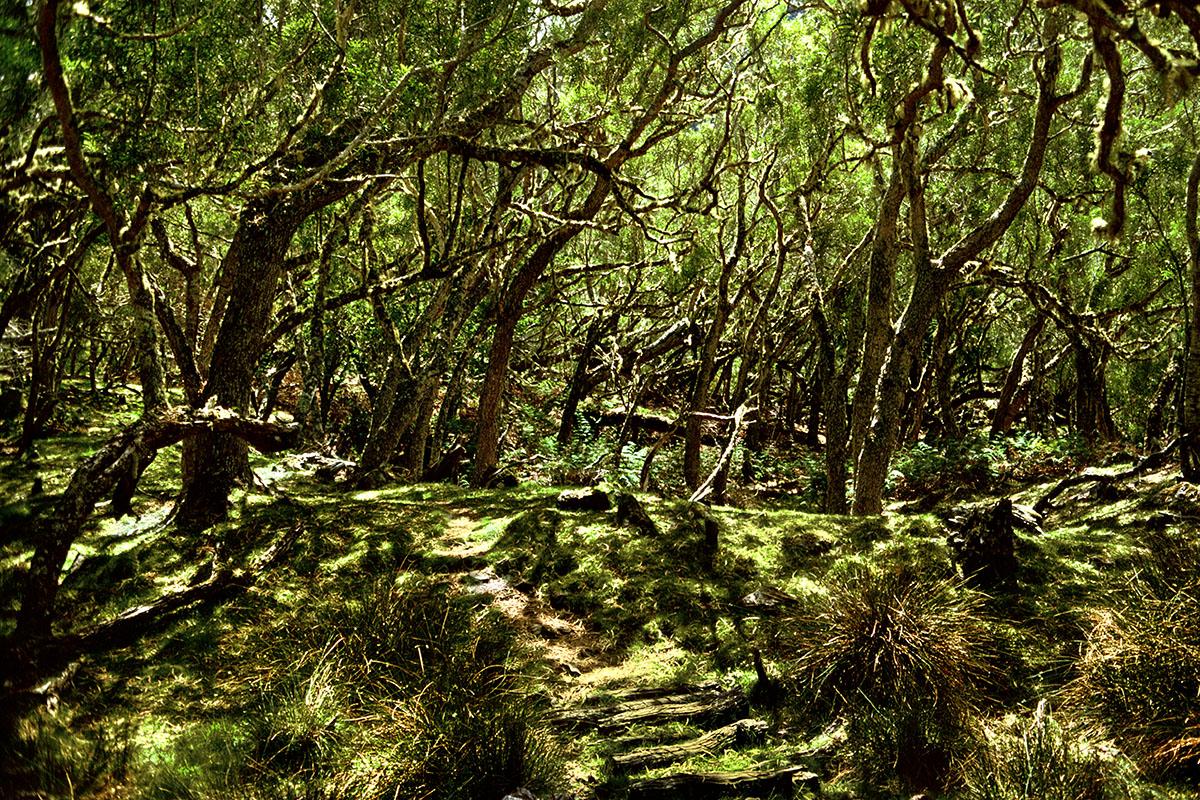 Sous-bois illuminé (1) – Plaine des Tamarins