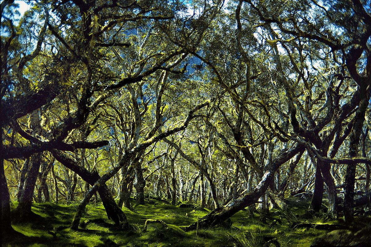 Sous-bois illuminé (4) – Plaine des Tamarins