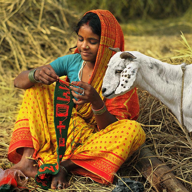 Région de Rajbiraj - Le cabri est un compagnon de vie - Teraï (Nepal)