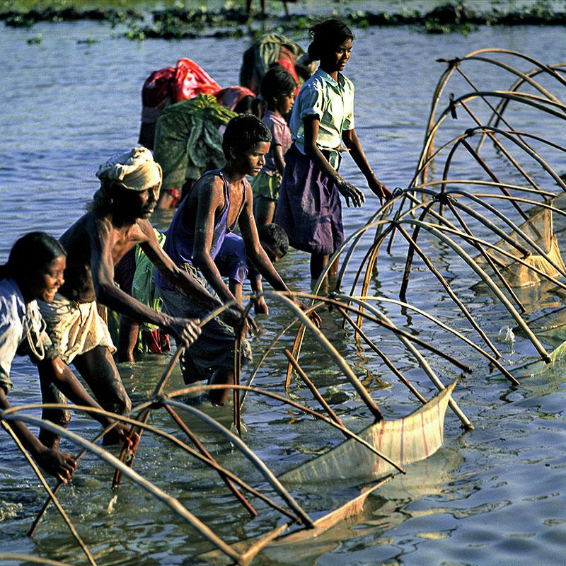 Pêche collective à l'épervier - Téraï (Népal)
