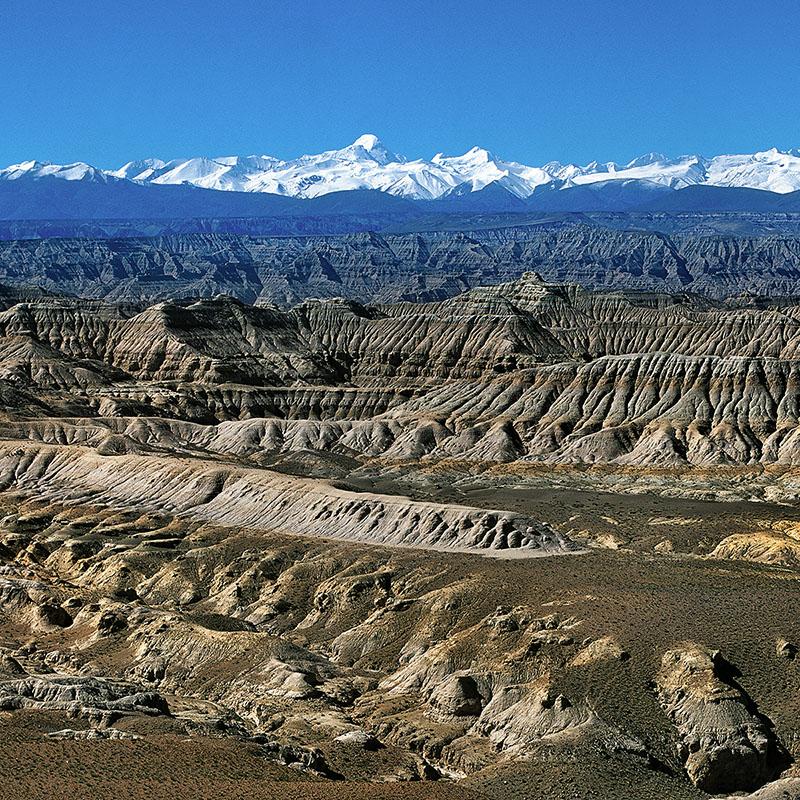 Mawangtang, ou Forêt de terre, 4400 m - Région de Thöling (Tibet)