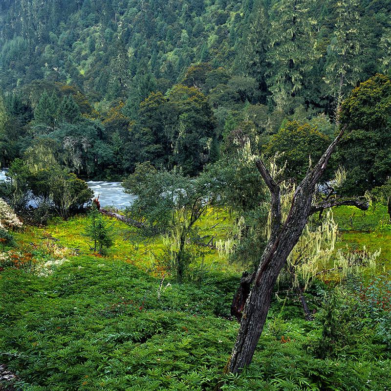 Végétation au bord du Parlung Tsang Po – Tibet